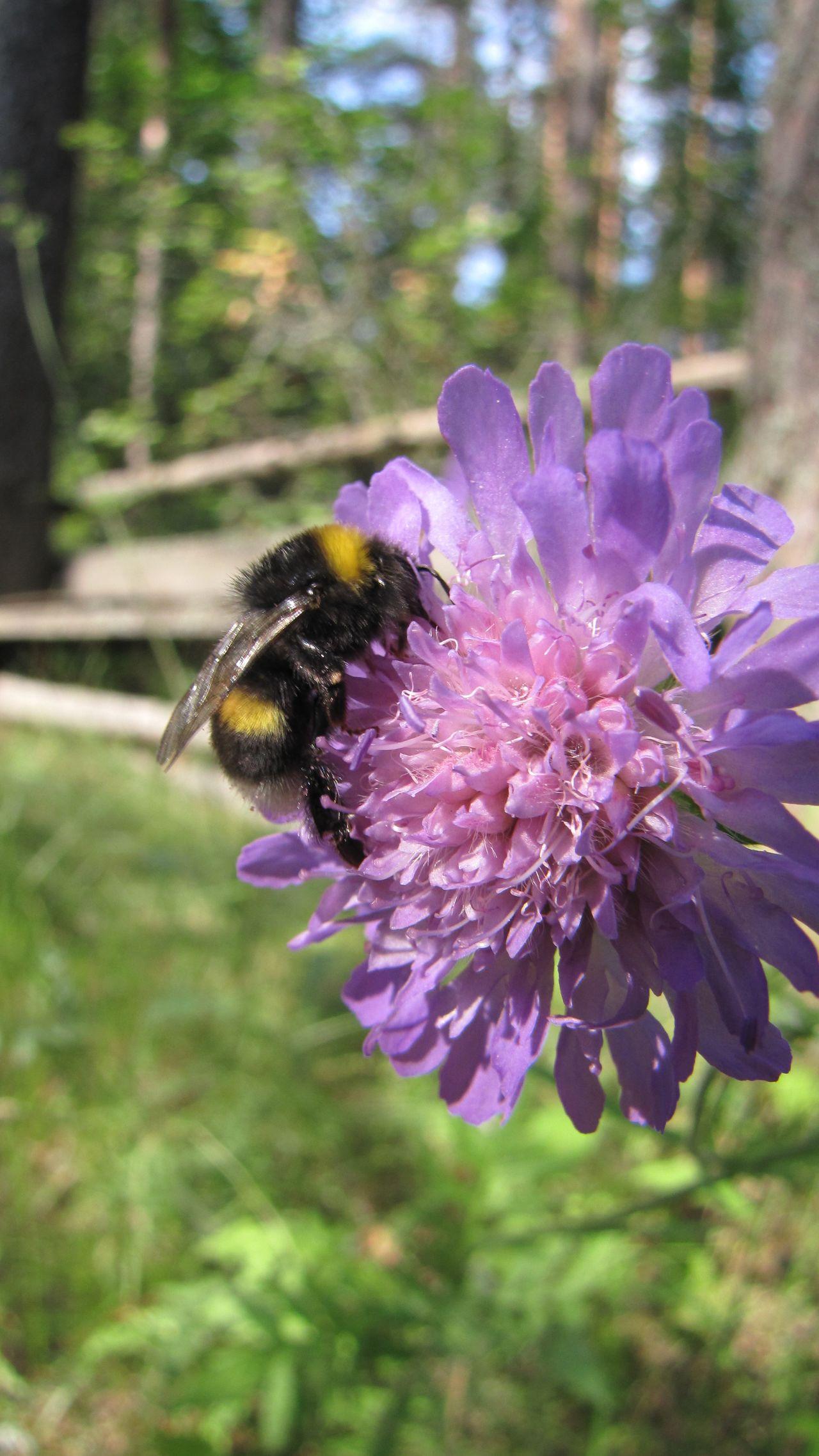 Beetle Bugs Bumblebee Green Wings Zoom Hum Violet шмель шмели
