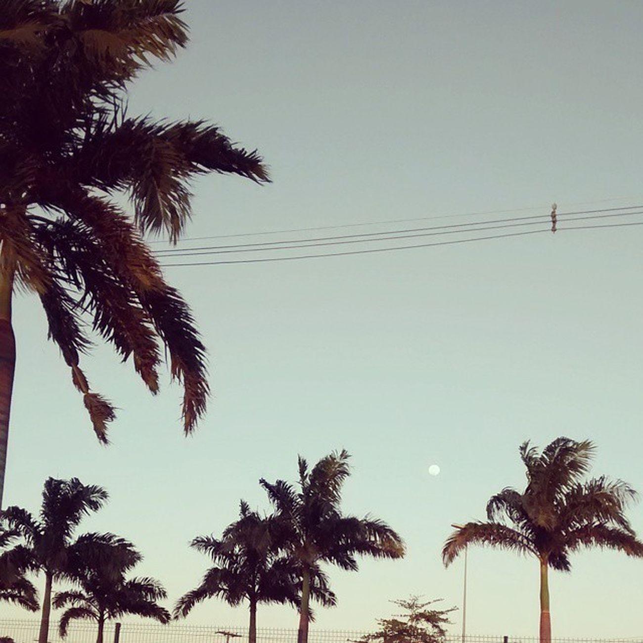 Finzinho de tarde perfeito ? Nature Fotografandooceu Photography Motog