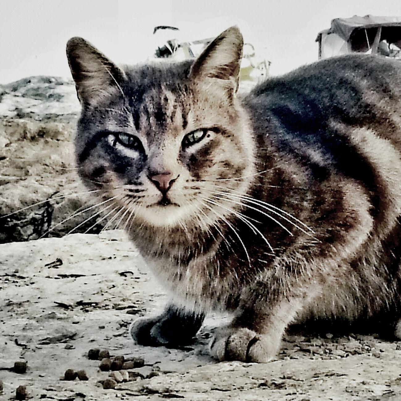 Cat Streetphotography Cats Taking Photos TheMinimals (less Edit Juxt Photography) Kedi Kedidir Kedi Bisgen
