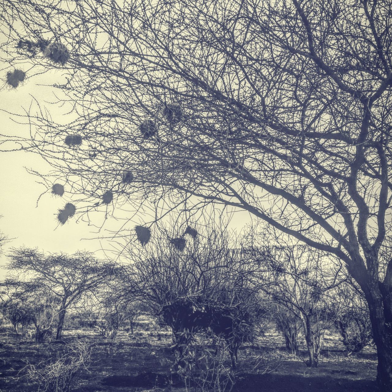 Tree Nature Growth Outdoors Mobile Photography