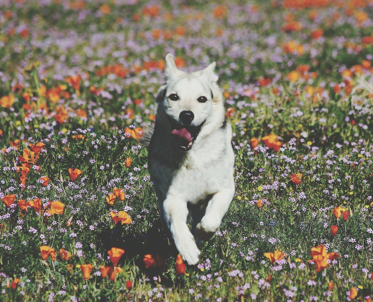 Pets Dog One Animal Domestic Animals Animal Themes Mammal Autumn Outdoors No People Grass Looking At Camera Day Protruding Puppy Flower Nature Portrait Sitting Retriever First Eyeem Photo