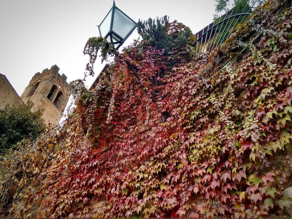 Cascade of Red + Green Autumn Leaves Decorate Medieval Architecture | Piazza San Domenico | Street Light | Tower | Living | This Week On Eyeem | Siena Tuscany Italy