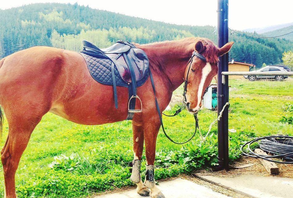 Horse I Love Horses Beauty My Best Friend Horse Photography  Beautifulhorse Horses