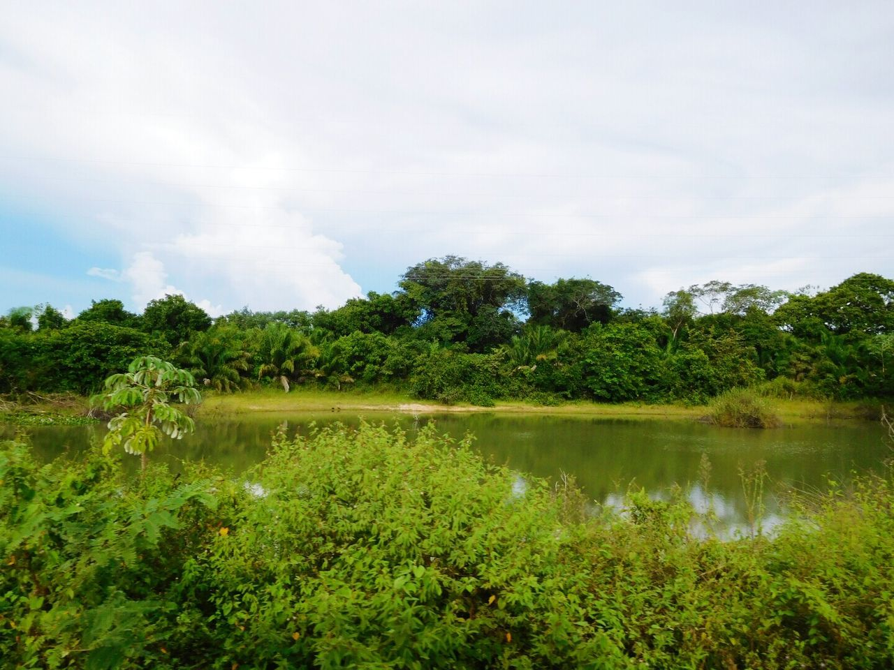 nature, plant, vegetation, tree, water, sky, outdoors, no people, growth, beauty in nature, tranquility, landscape, scenics, forest, grass, day