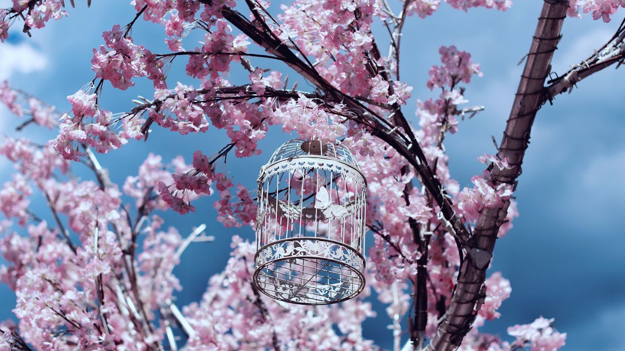 Cherry Blossom Flower Tree Blossom Branch Fragility Pink Color Cherry Tree Springtime Beauty In Nature Low Angle View No People Growth Nature Petal Freshness Day Sky Outdoors Blooming