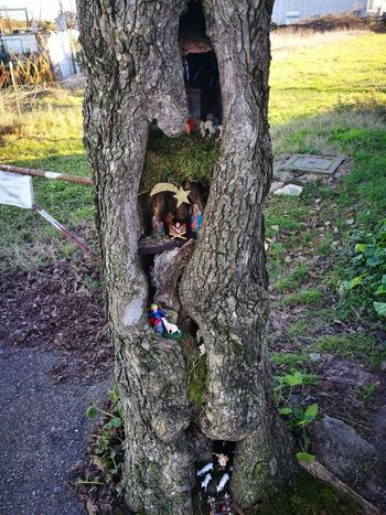 Real People One Person Lifestyles Day Outdoors Wet Leisure Activity Tree Human Body Part Human Hand Nature One Man Only People Nativity Scene
