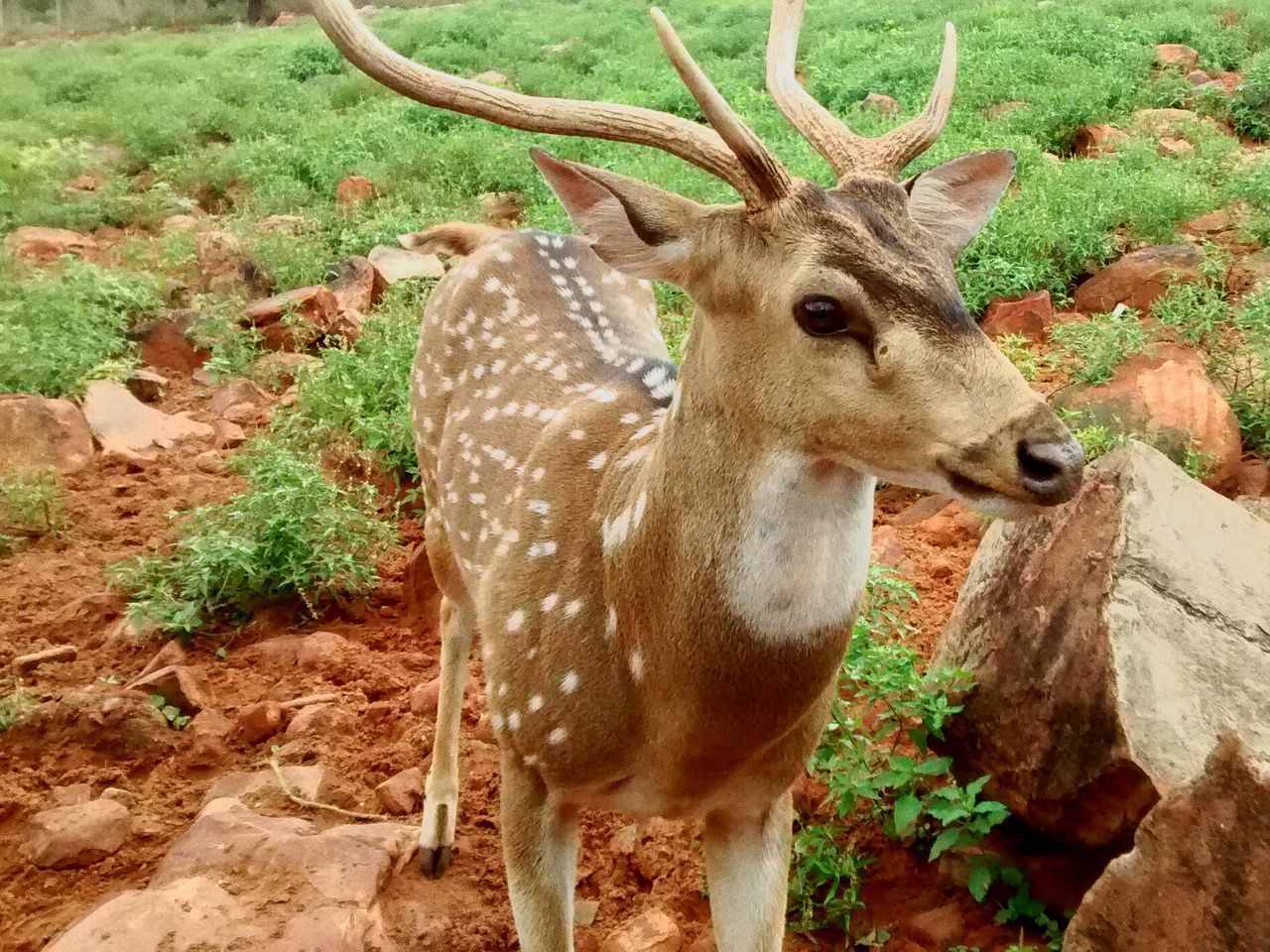 Those eyes that say something as we stare Wildlife & Nature Wildlife Deer Deer Hunting Staring At The Sky Capturing Freedom Gazelle My Eyes Innocence Animal_collection
