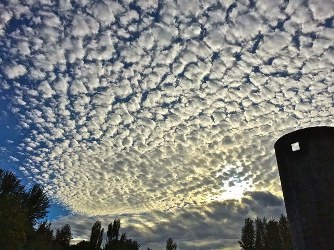 Look Up Skyporn Cloudporn Streamzoofamily The Great Outdoors - 2015 EyeEm Awards