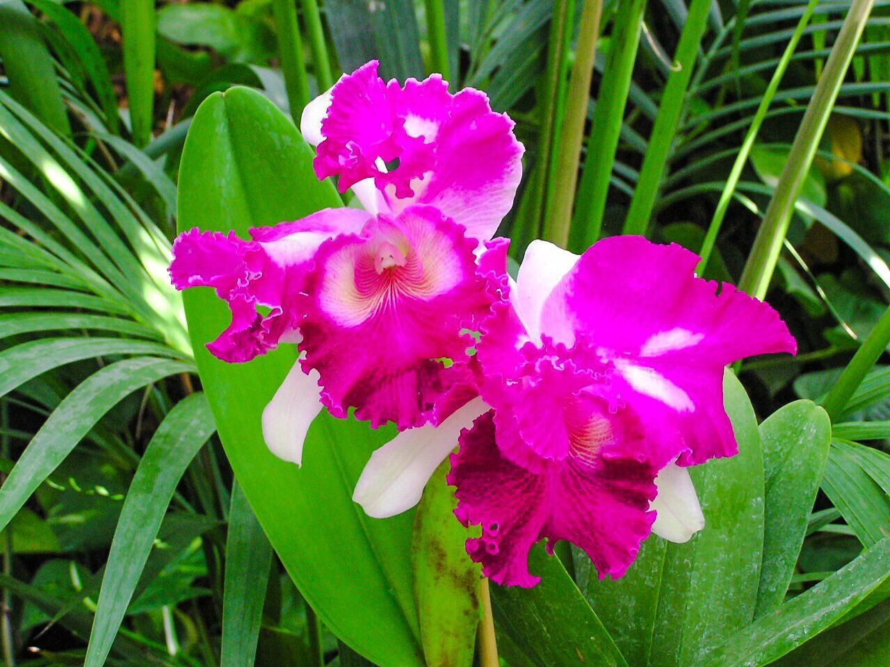 Flower Head Growth Flower Petal Fragility Pink Color Plant Green Color Beauty In Nature Nature Leaf Freshness Close-up Blooming Outdoors No People Day Nature Blooming Flower Orchids Orchid Blossoms Orchid Pink Flower Floral Flowers