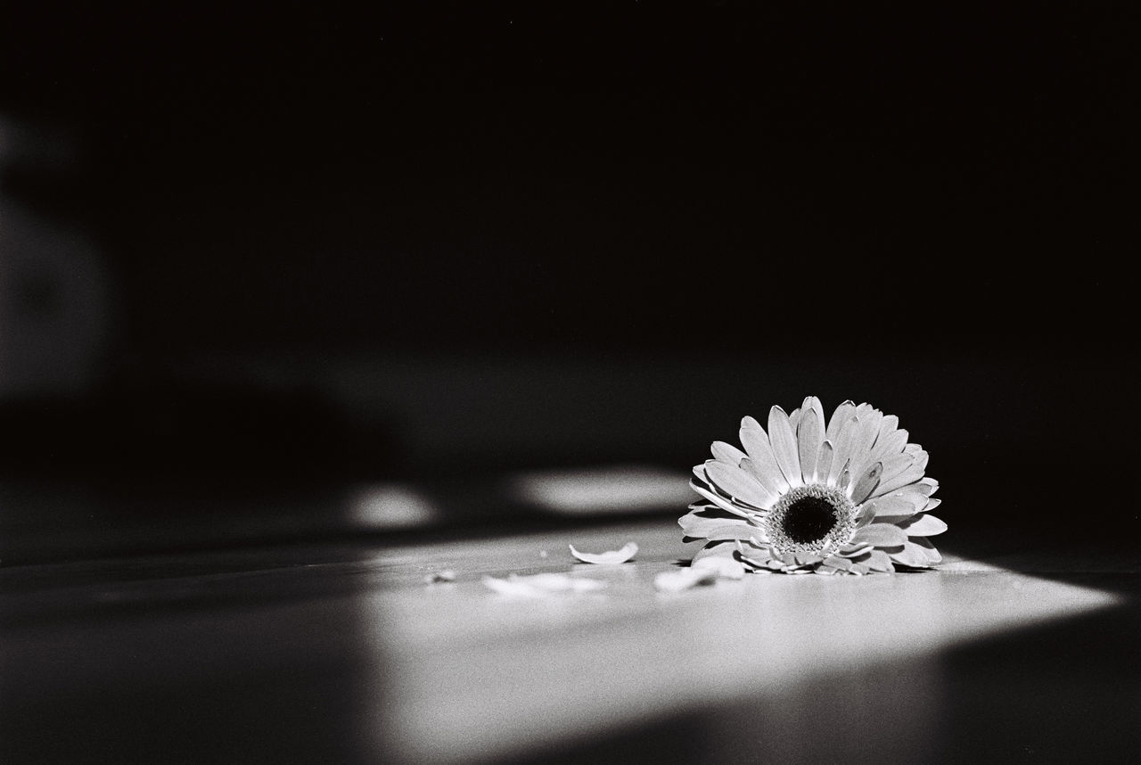 135 35mm Analogue Photography Blackandwhite Bw Film Flower Monochrome