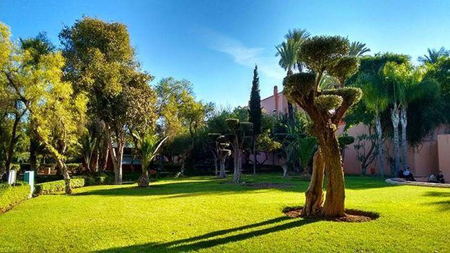 Nice green area for nice romantic walk ❤ Marrakesh Morocco Moroccotraveltips Morocco_travel Moroccotravel