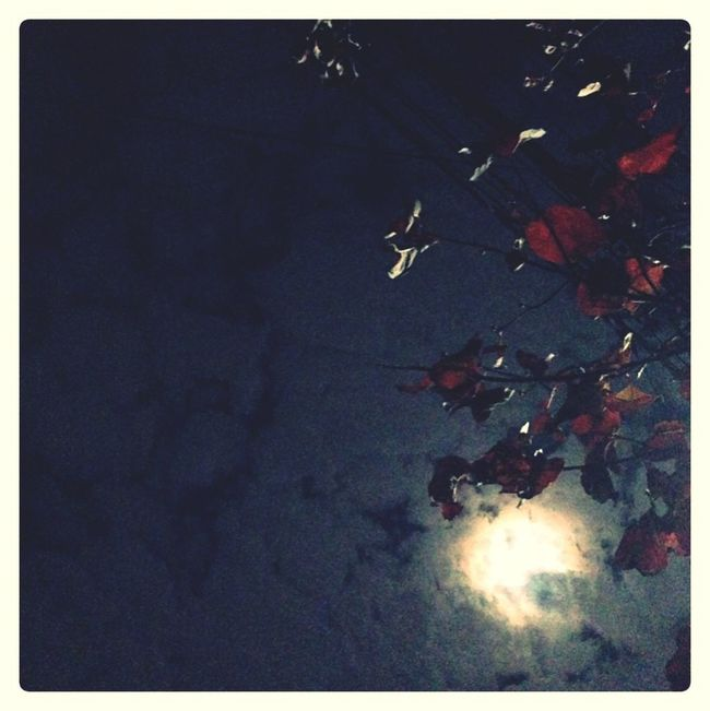 Autumn Night Moonlight Red Leaves
