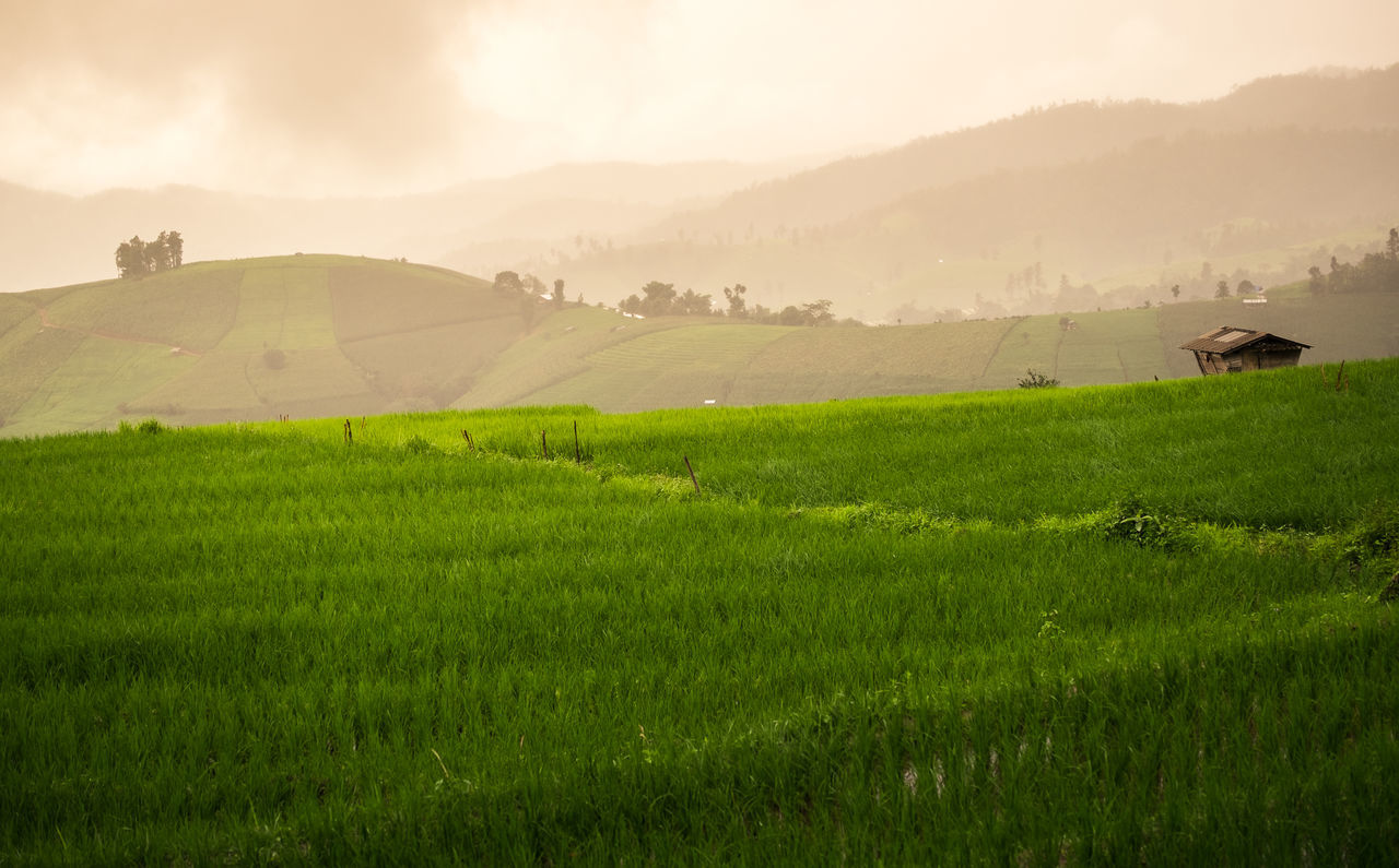 field, agriculture, landscape, nature, farm, rural scene, tranquil scene, grass, beauty in nature, scenics, green color, tranquility, growth, outdoors, no people, mountain, day, sky
