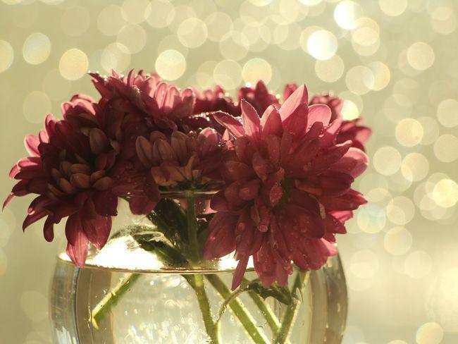 Bokeh Lights Bokeh Bokehlicious Bokeh Photography EyeEm Best Shots EyeEm Nature Lover Beautiful Spring Flowers