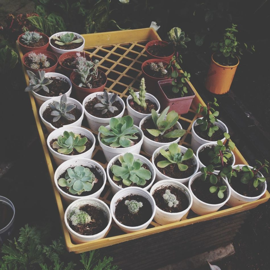 Plants 🌱 are my friends. Taking Photos Traveling Plants Pale Nature Green Favorite