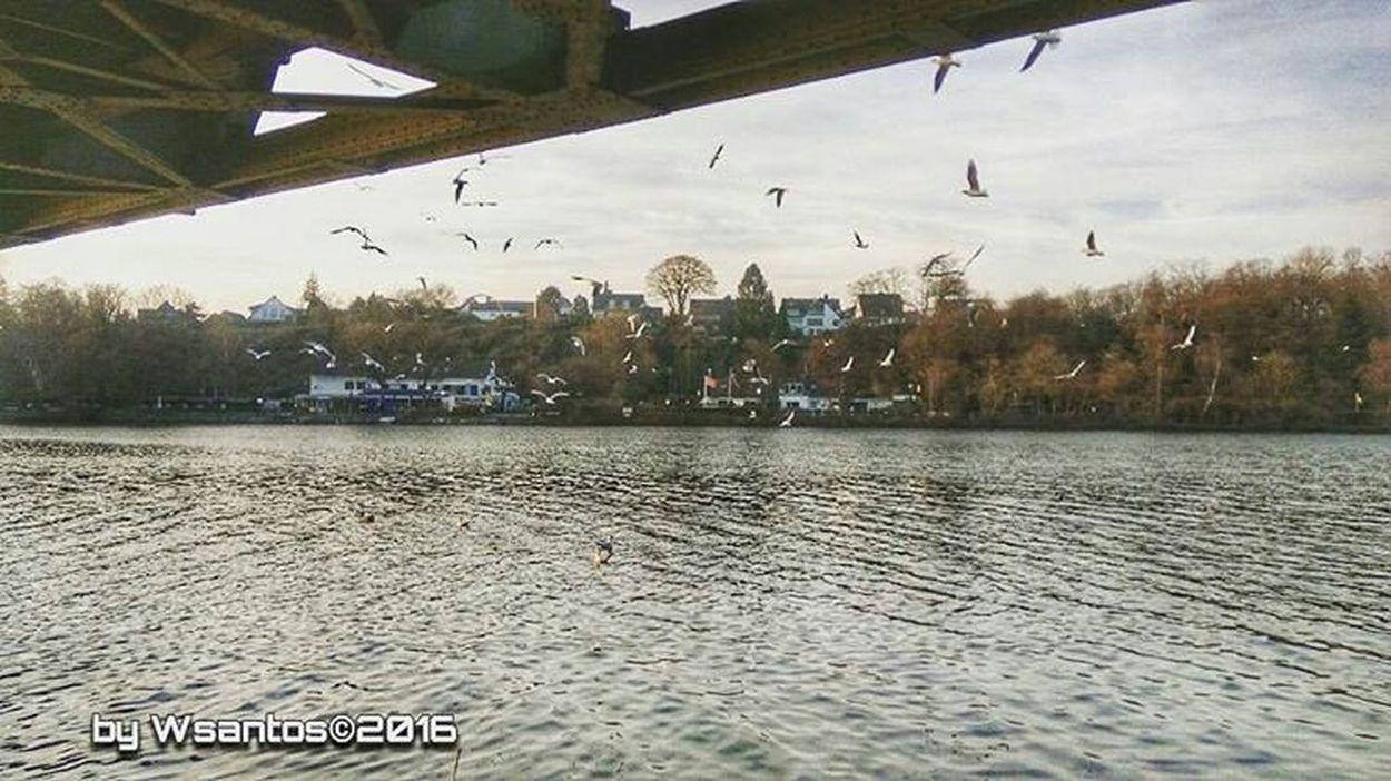 Water Baldeneysee Photos Official EyeEm © Essen_Ruhr GERMANY🇩🇪DEUTSCHERLAND@