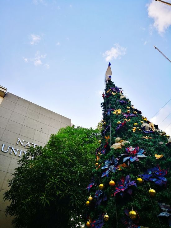 Paskong National Tree Christmas Tree Celebration Low Angle View Tradition Cultures Christmas Decoration Christmas No People Architecture Sky Outdoors Travel Destinations Day Building Exterior HuaweiP9 HuaweiP9Photography AStepAhead YearOfDualCam