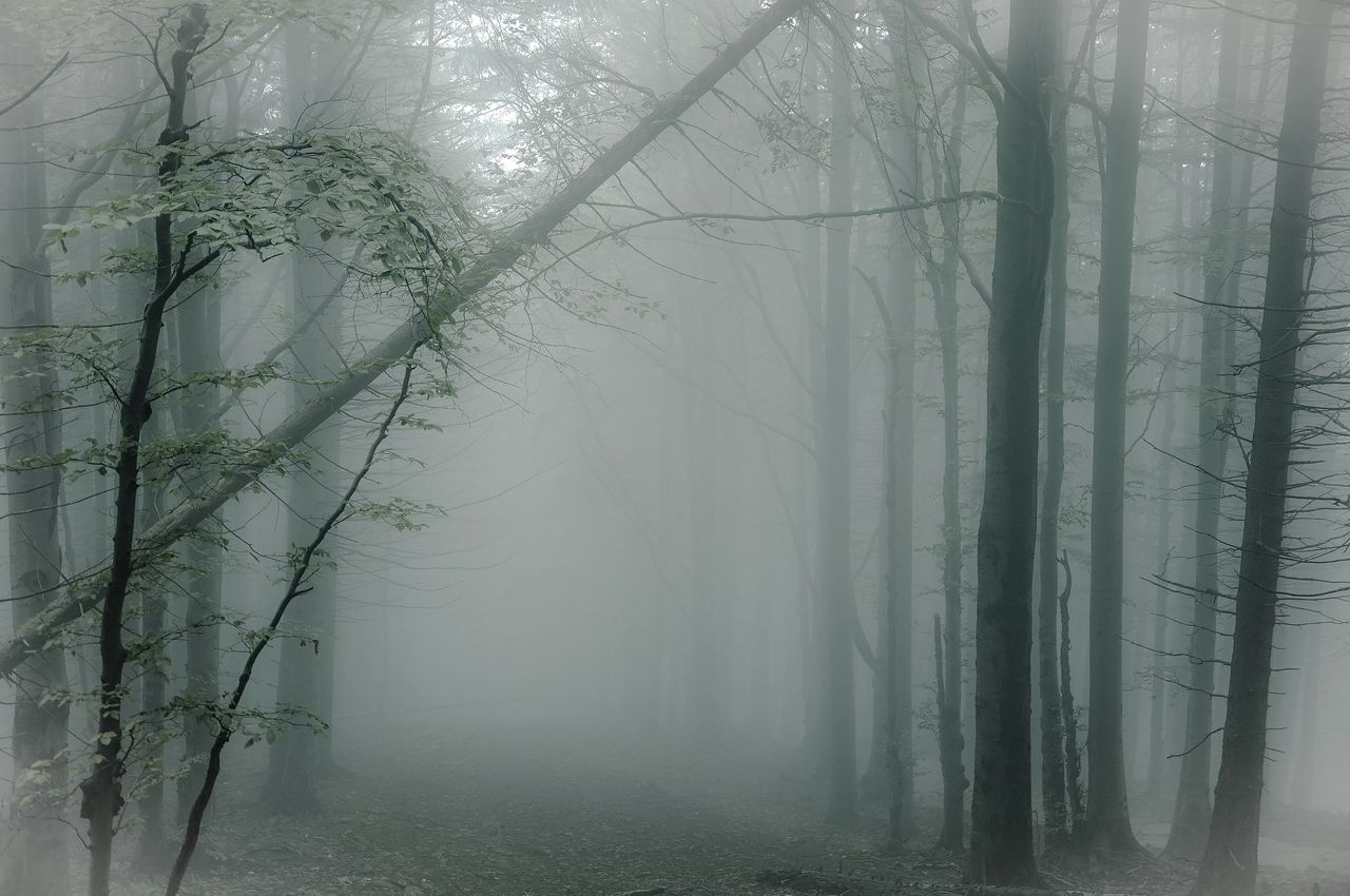 Beautiful stock photos of gothic, Beauty In Nature, Day, Foggy, Forest