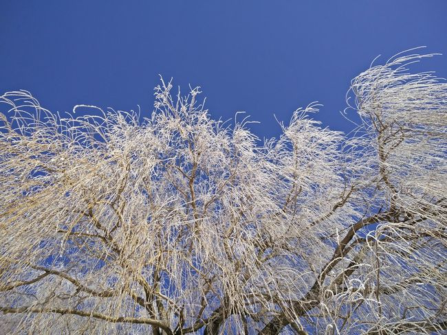 Got icecold fingers while taking pictures ... Nature Branch Winter Beauty In Nature Naturelovers Winter Wonderland White Frost Nature_collection Tree Nature Photography Willow Winter Oneplus2