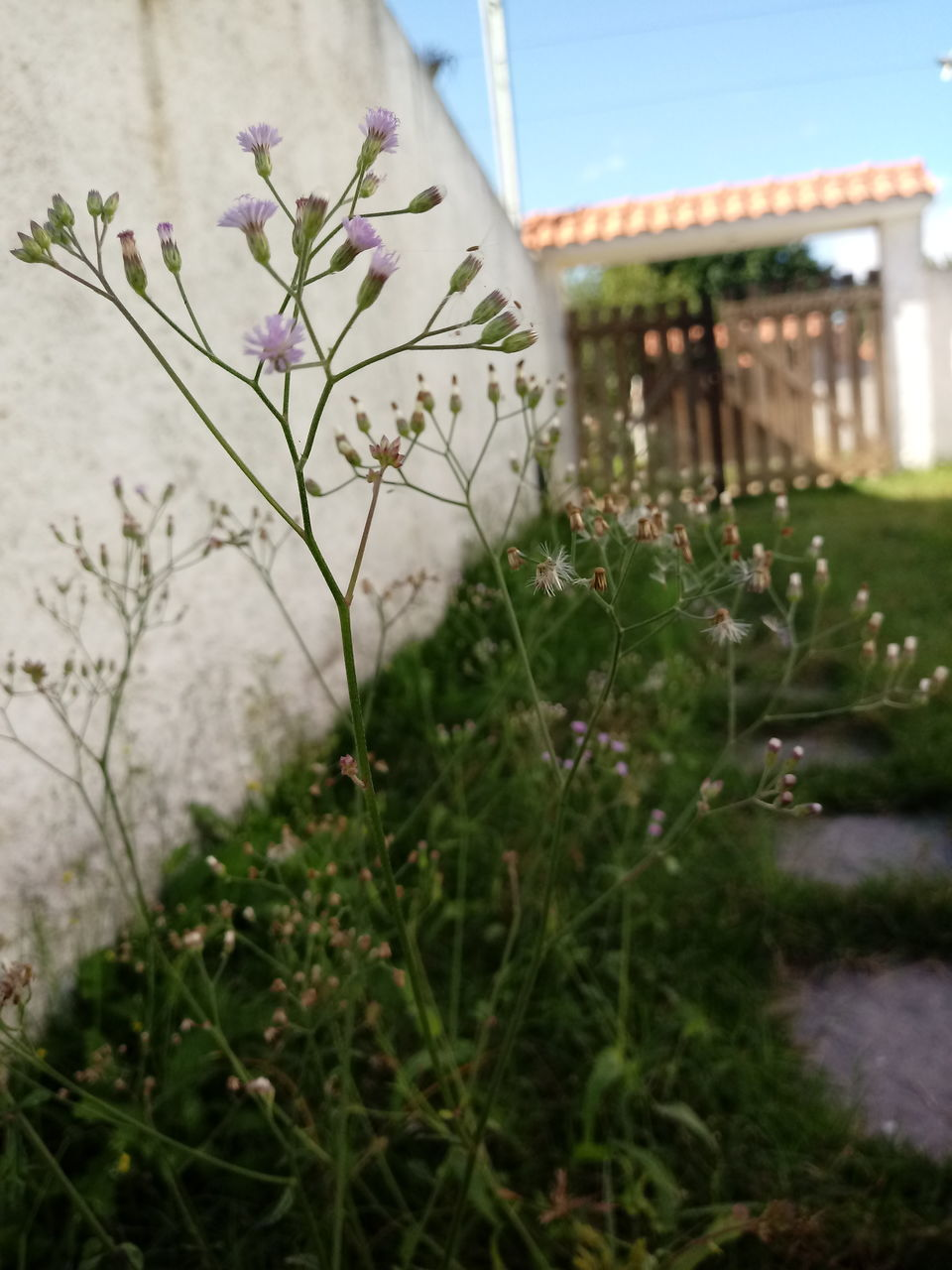 flower, nature, grass, plant, growth, no people, outdoors, building exterior, day, beauty in nature, architecture, built structure, fragility, freshness, sky, close-up