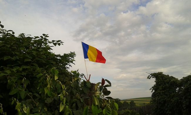 Flag Flags In The Wind  Flag In The Sky Sky Clouds Sky And Clouds Nature Romania Romanian Flag Trees Trees And Sky Tree Trunk Tree Romanian Lands Flags