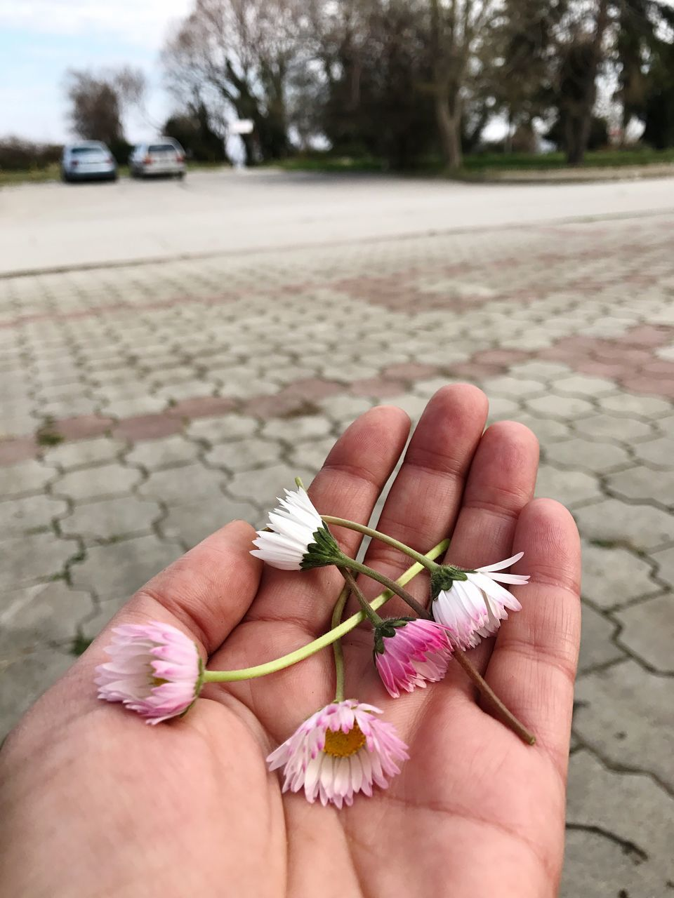 real people, flower, human body part, one person, outdoors, human hand, focus on foreground, day, low section, close-up, women, human leg, lifestyles, fragility, nature, flower head, tree, freshness, frangipani, people