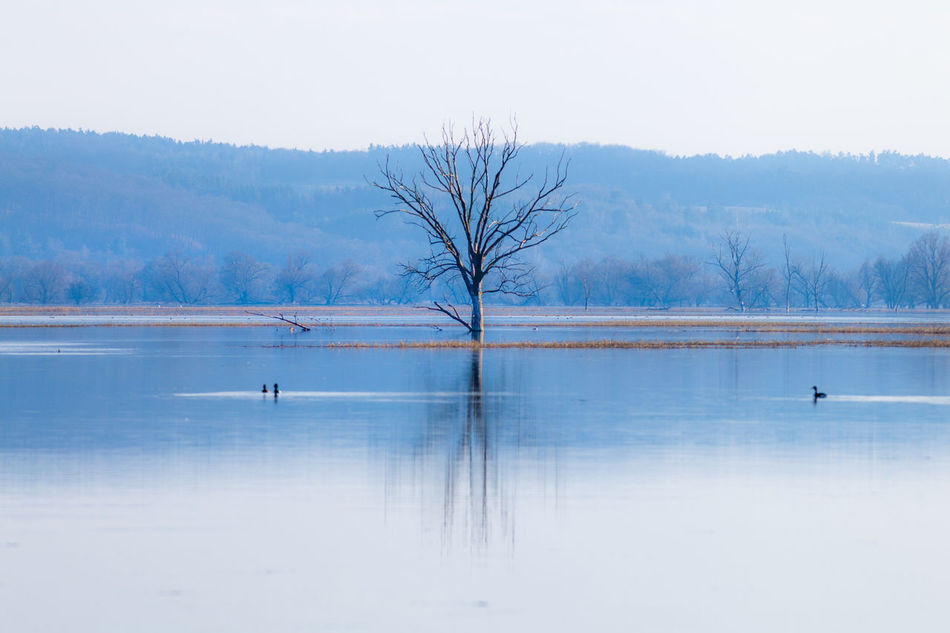 Bar Bare Tree Beauty In Nature Bird Blue Boarder Cold Temperature Day Flood High Water Lake Landscape Nature No People Oder Outdoors Reflection River Sky Tranquility Tree Water Winter