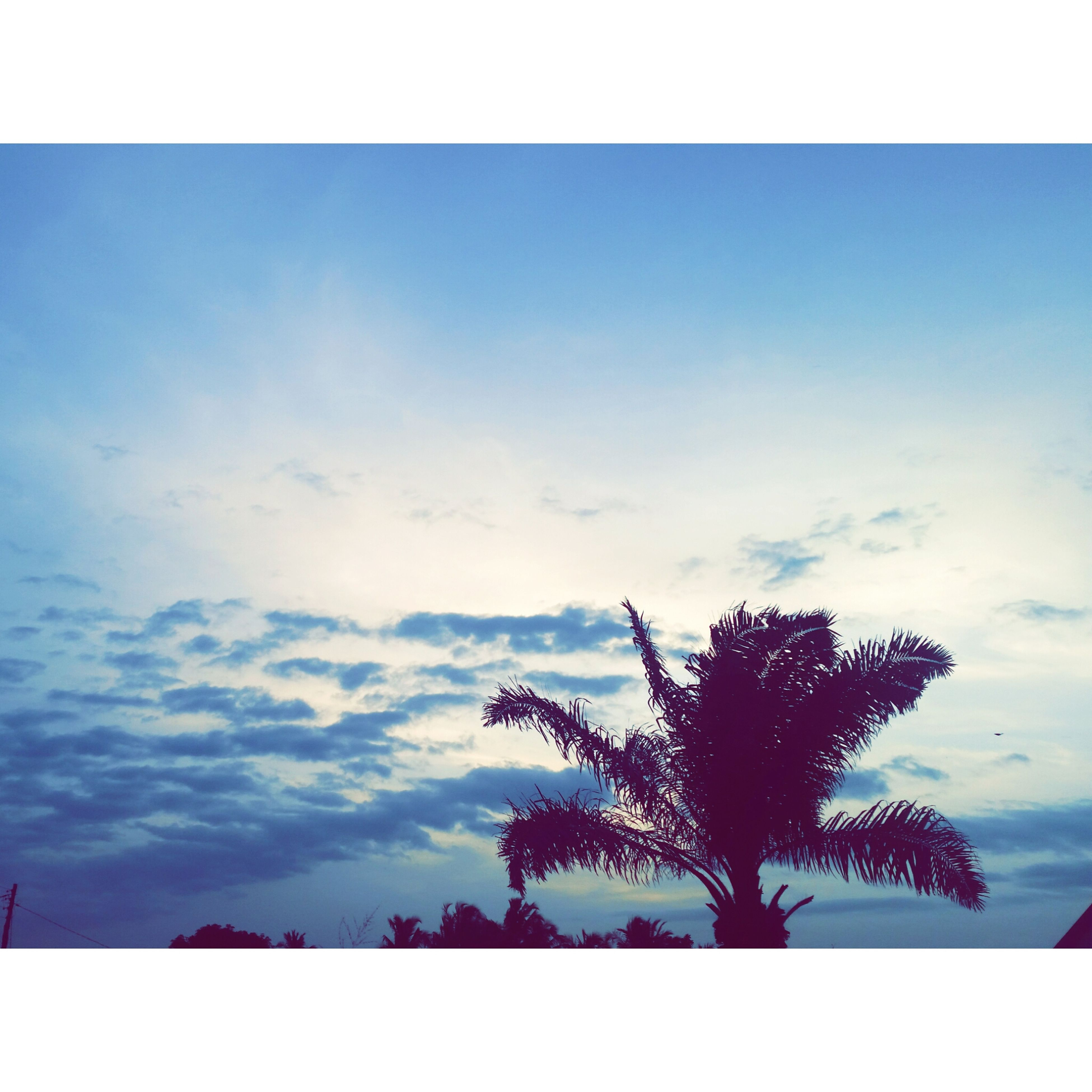 transfer print, sky, tree, tranquility, silhouette, auto post production filter, beauty in nature, tranquil scene, scenics, low angle view, cloud - sky, nature, cloud, blue, growth, cloudy, outdoors, idyllic, no people, day