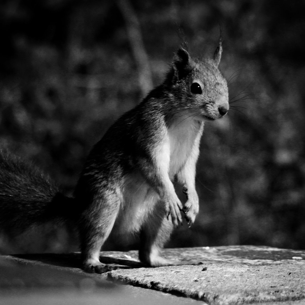 one animal, animal themes, mammal, no people, outdoors, squirrel, day, animals in the wild, close-up, nature
