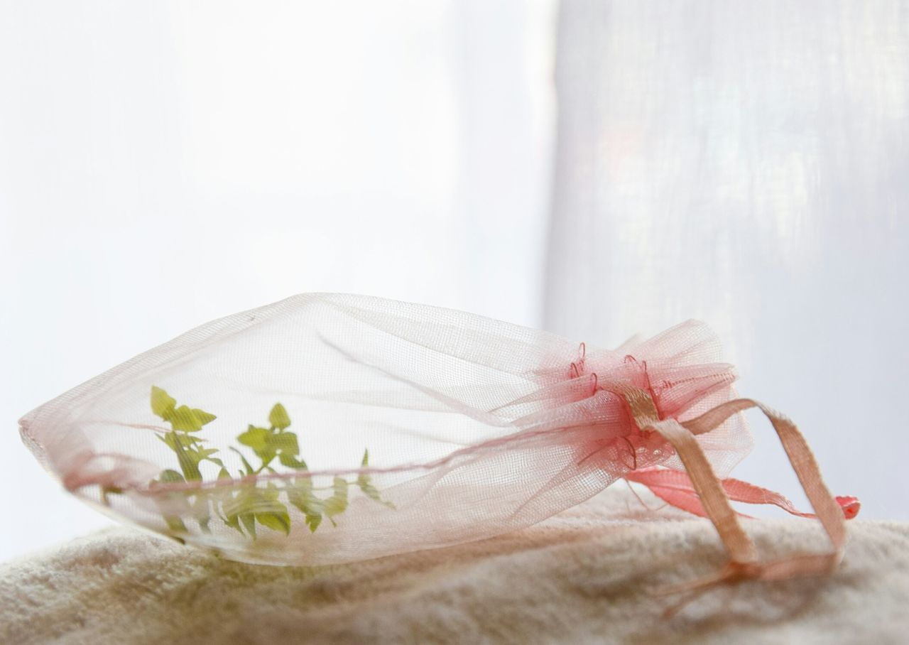 Fragile Life Plant Leaf Indoors  No People Inside Things Little Bag Pastel Colors Close-up Freshness Day Lieblingsteil Simplicity Still Life