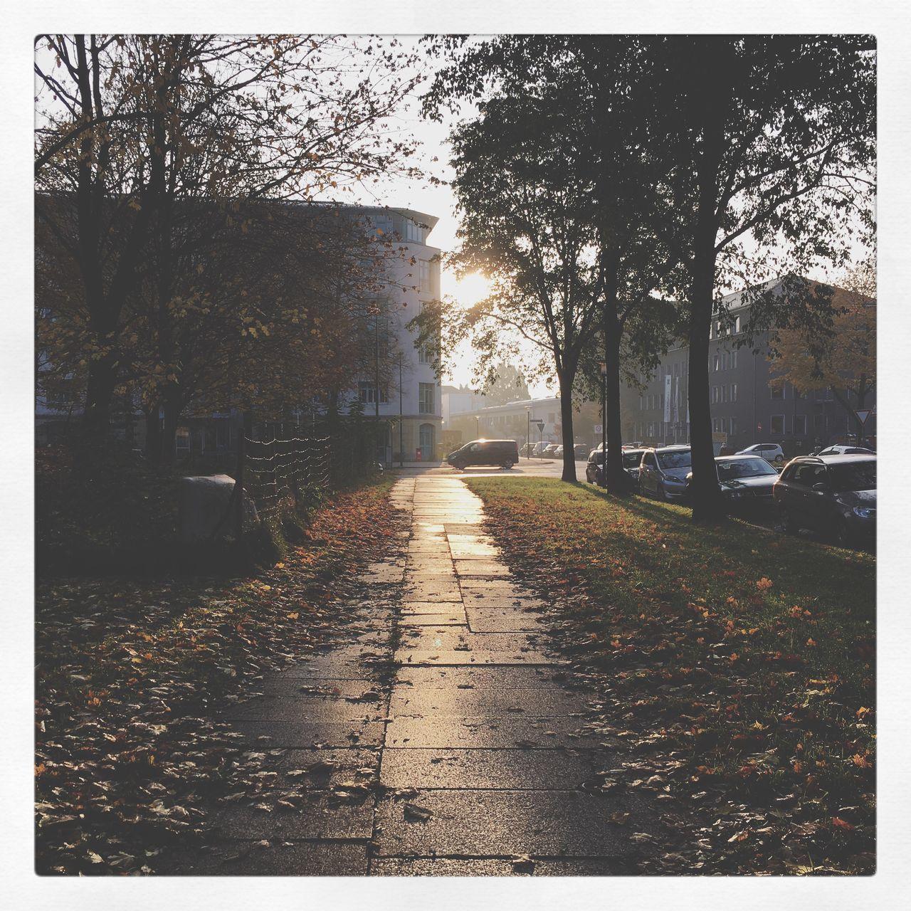 Fall Beauty AMPt - Still Life (Nature Morte) Autumn Leaves Autumn Colors Autumn Reflection