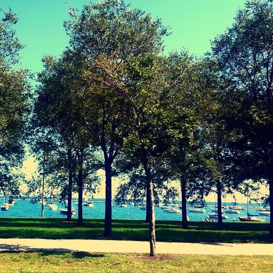 Lakeshoredrive Lakemichigan Chicagosummers Wheredtheygo summertimesadness