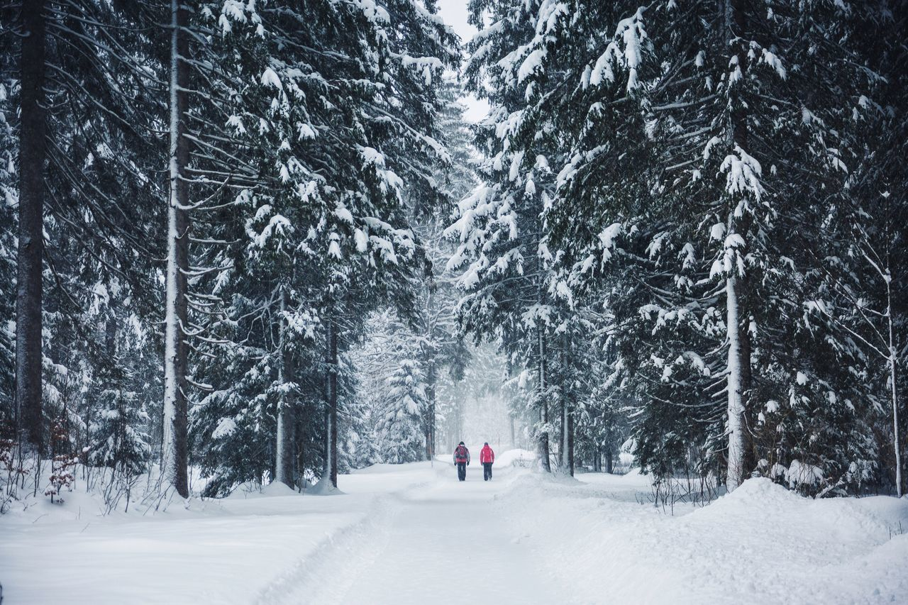 Winter walks Austria Snow Cold Temperature Winter Tree White Color Weather Nature Beauty In Nature Day Outdoors Scenics Snowing People