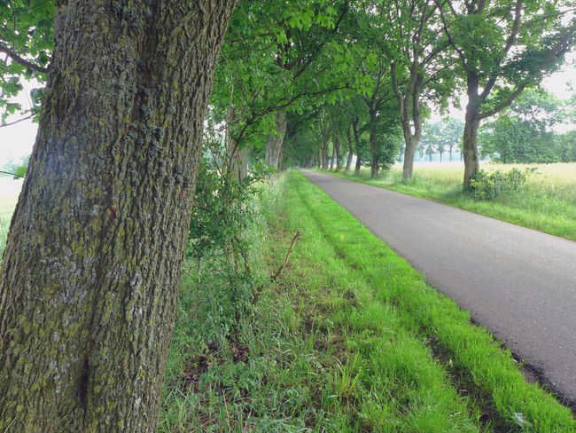 Alley Asphalt Green Color Growth Landscape Lush - Description Nature The Way Forward Tranquility Tree Tree Trunk