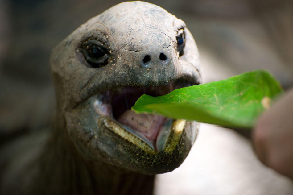 Beautiful stock photos of leaf, , Animal, Eating, Environment