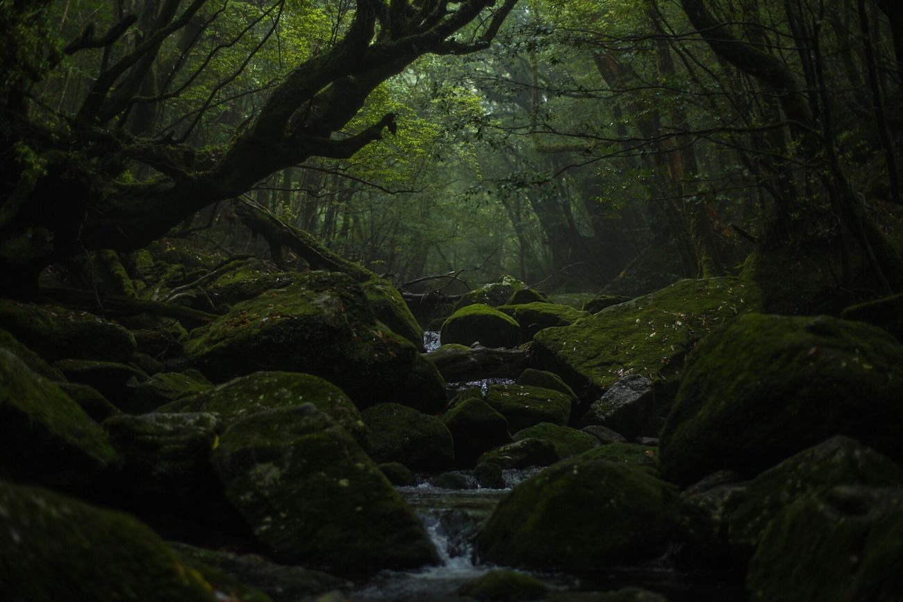 Yakushima Beauty In Nature Nature Vscocam Outdoors Japan Eyemphotography EyeEm Best Shots The Week Of Eyeem Introducing Culture Of Japan Which Must Be Left To The Future…… 未来に残す日本の文化 CarlZeiss OpenEdit Planar50/1.4 Canon Vscogood Zeiss Forest Nature No People