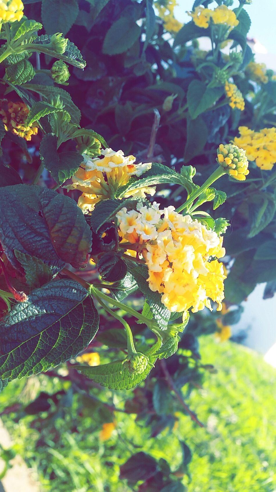 Wellow Flowerlovers Flowers_collection Flowers,Plants & Garden Colors Green Color Green