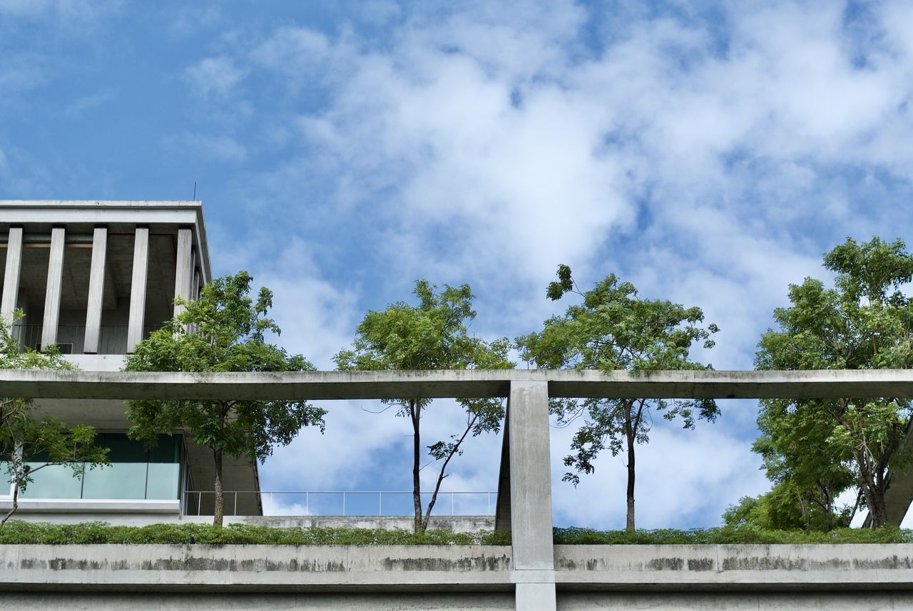 tree, sky, cloud - sky, day, no people, outdoors, low angle view, nature, built structure, architecture, building exterior