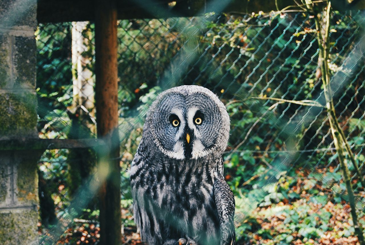 Beautiful stock photos of owl, Alertness, Animal Themes, Animal Wildlife, Animals In The Wild