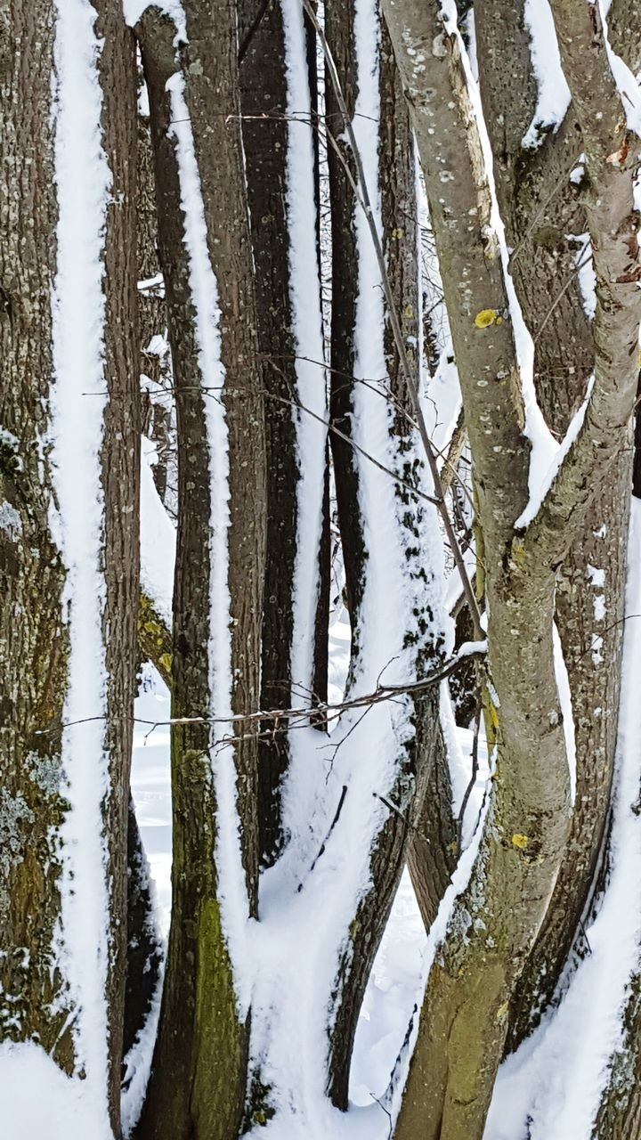 snow, winter, cold temperature, tree trunk, nature, tree, day, outdoors, no people, tranquility, tranquil scene, forest, frozen, landscape, scenics, beauty in nature, bare tree, close-up