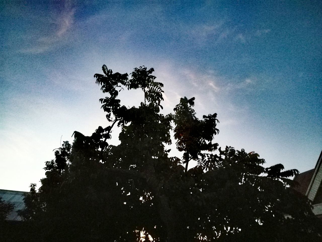 Tree Low Angle View Sky No People Outdoors Nature Day Growth Branch Beauty In Nature Close-up Pixelated