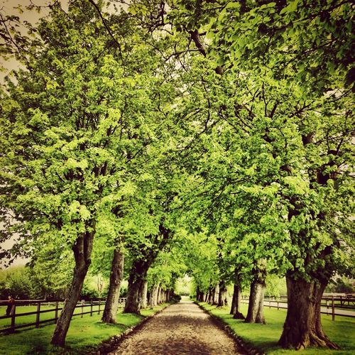 Trees Symmetry EyeEm Nature Lover EyeEm Best Shots