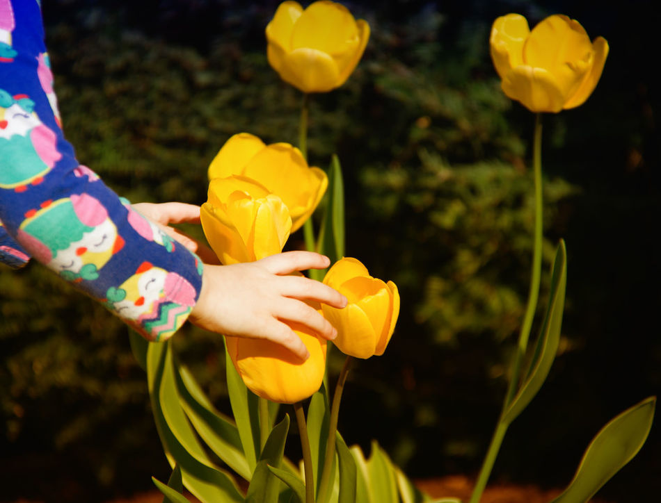 No Flowers were harmed in the making of this photo. (Although, I admit, It was a close call : ) Things I Like my Children Exploring and Learning. They certainly have Urban Spring Fever. Tulips Hands At Play Hands At Work (a child's job is to Play) Nature's Playground Telling Stories Differently Showing Imperfection The Photojournalist - 2016 EyeEm Awards Anna Beth