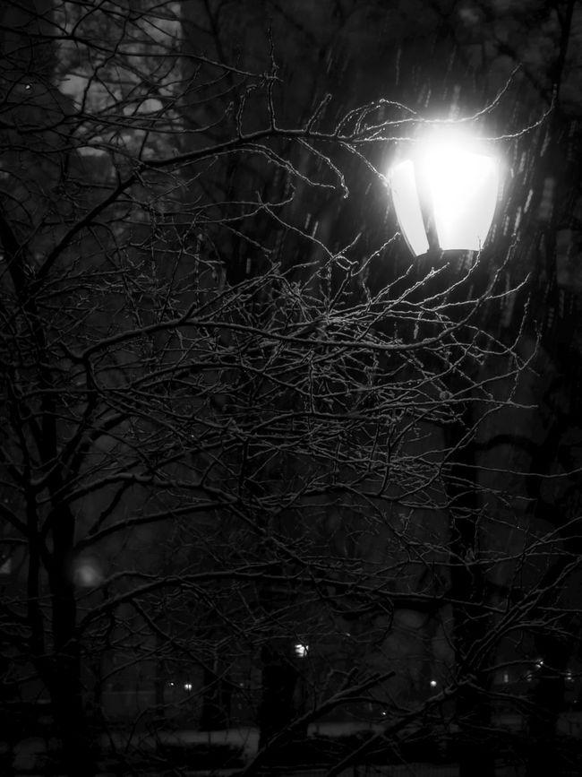 Noir Winter Scene Winter Wintertime Winter Wonderland Winter Trees Film Noir Noir Blackandwhite Black And White Black & White Blackandwhite Photography Black&white Black And White Photography Street Lights Lamppost Lamps Showcase: February