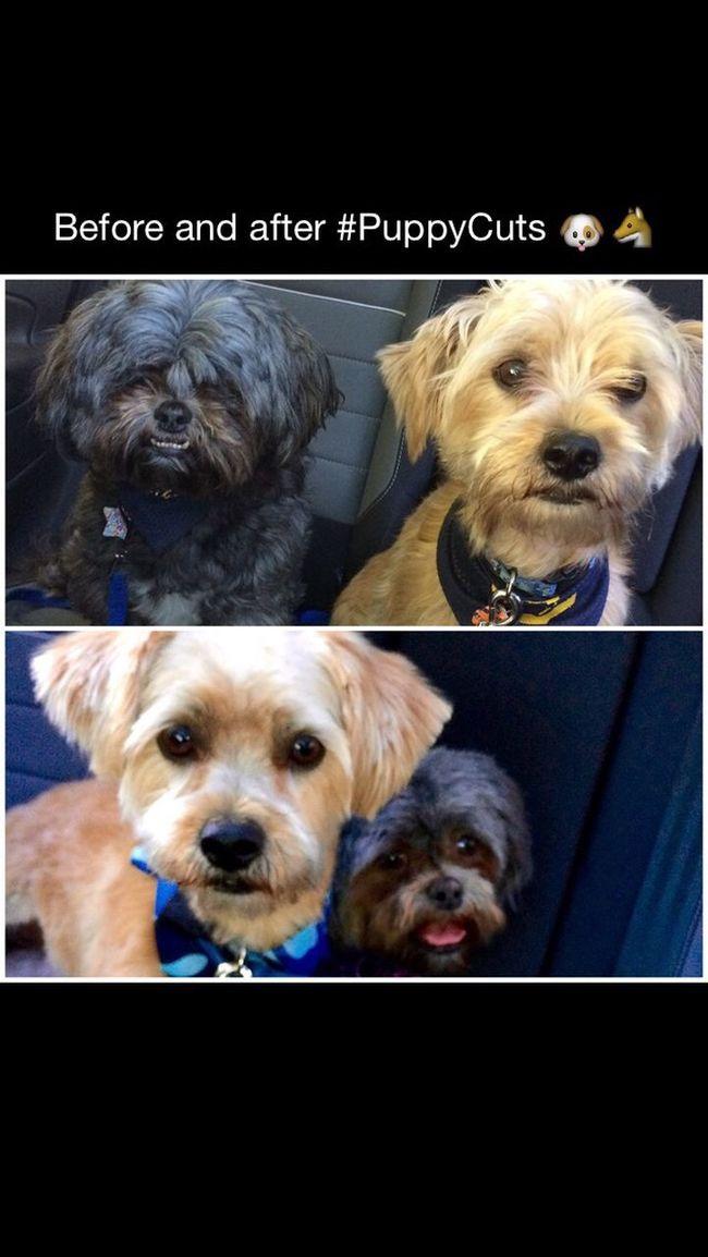 Lyla&Ziggy I Love My Dogs