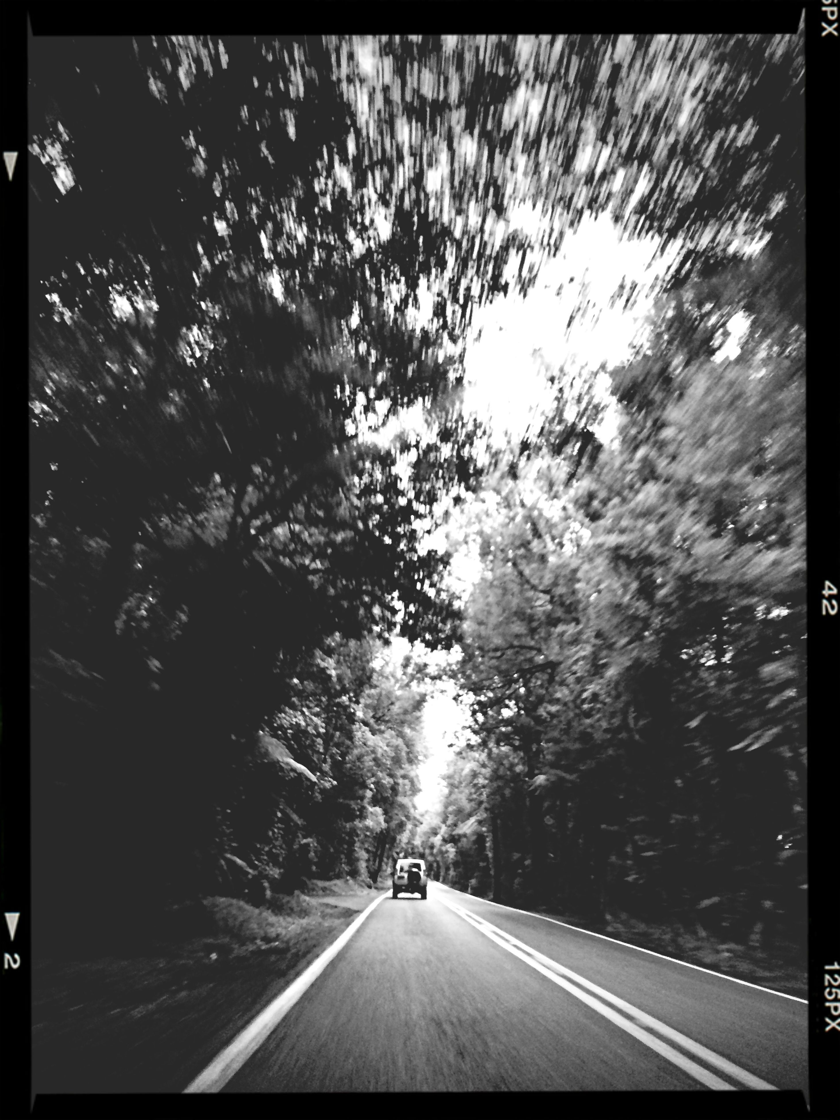 transportation, transfer print, the way forward, road, tree, diminishing perspective, auto post production filter, road marking, car, vanishing point, street, mode of transport, land vehicle, country road, nature, windshield, sky, outdoors, tranquility, no people