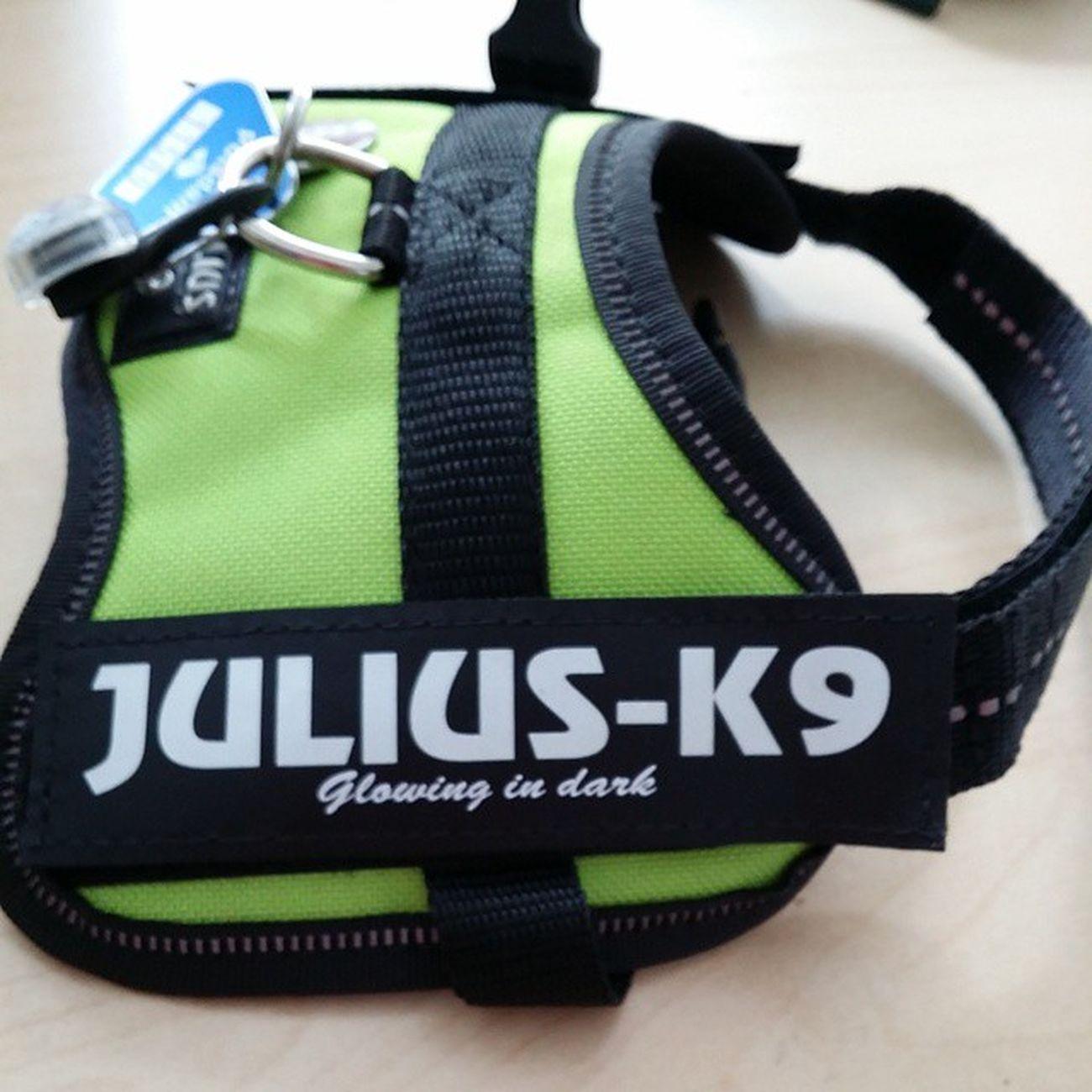 Neues Geschirr für den kleinen Liebling, natürlich in Hundemama s Lieblingsfarbe Grün Julius K9