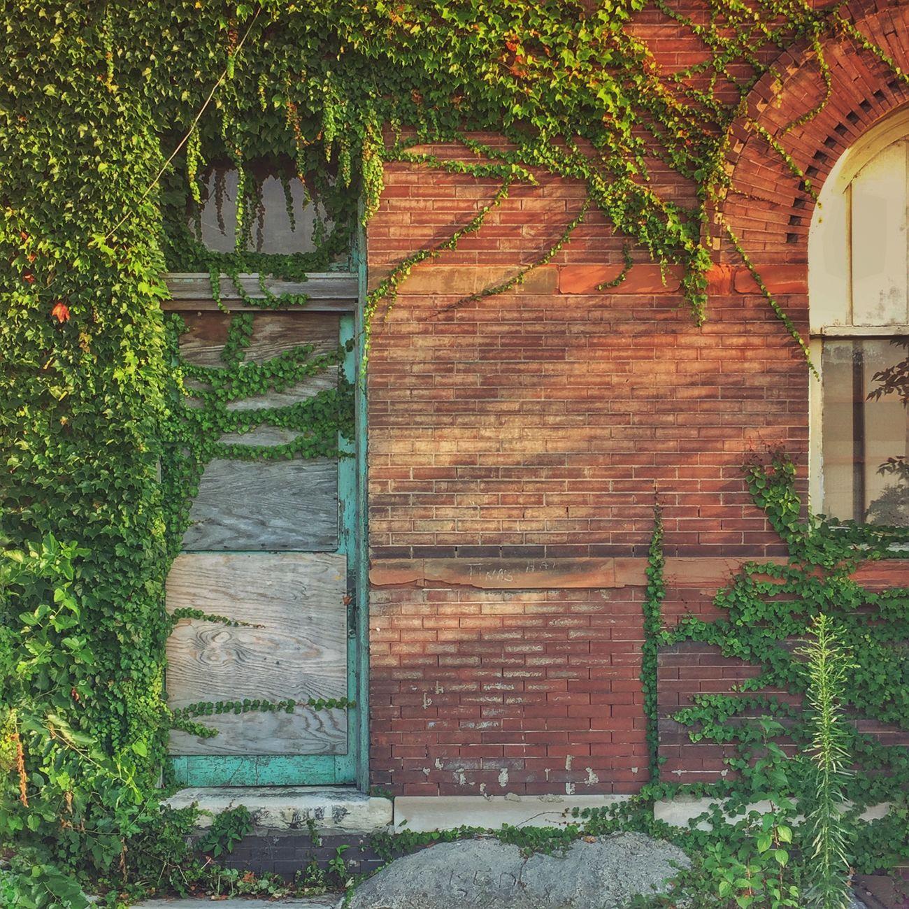 Overgrown wall. Brick Wall Ivy Leaves Door