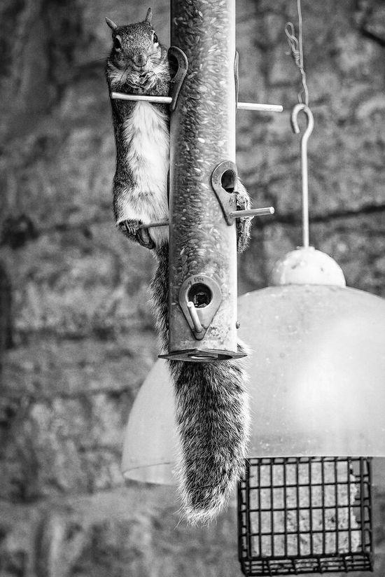 Olympus OM-D EM-1 Squirrel Blackandwhite 40-150