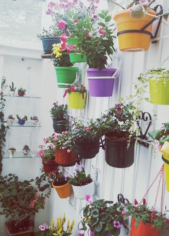 Flowers Flower Plant Flower Arrangement Nature Flores Maseta Colors Colorful Masetas At Home Colours And Patterns Colors And Patterns